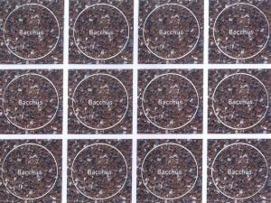 cbacchus-300x225